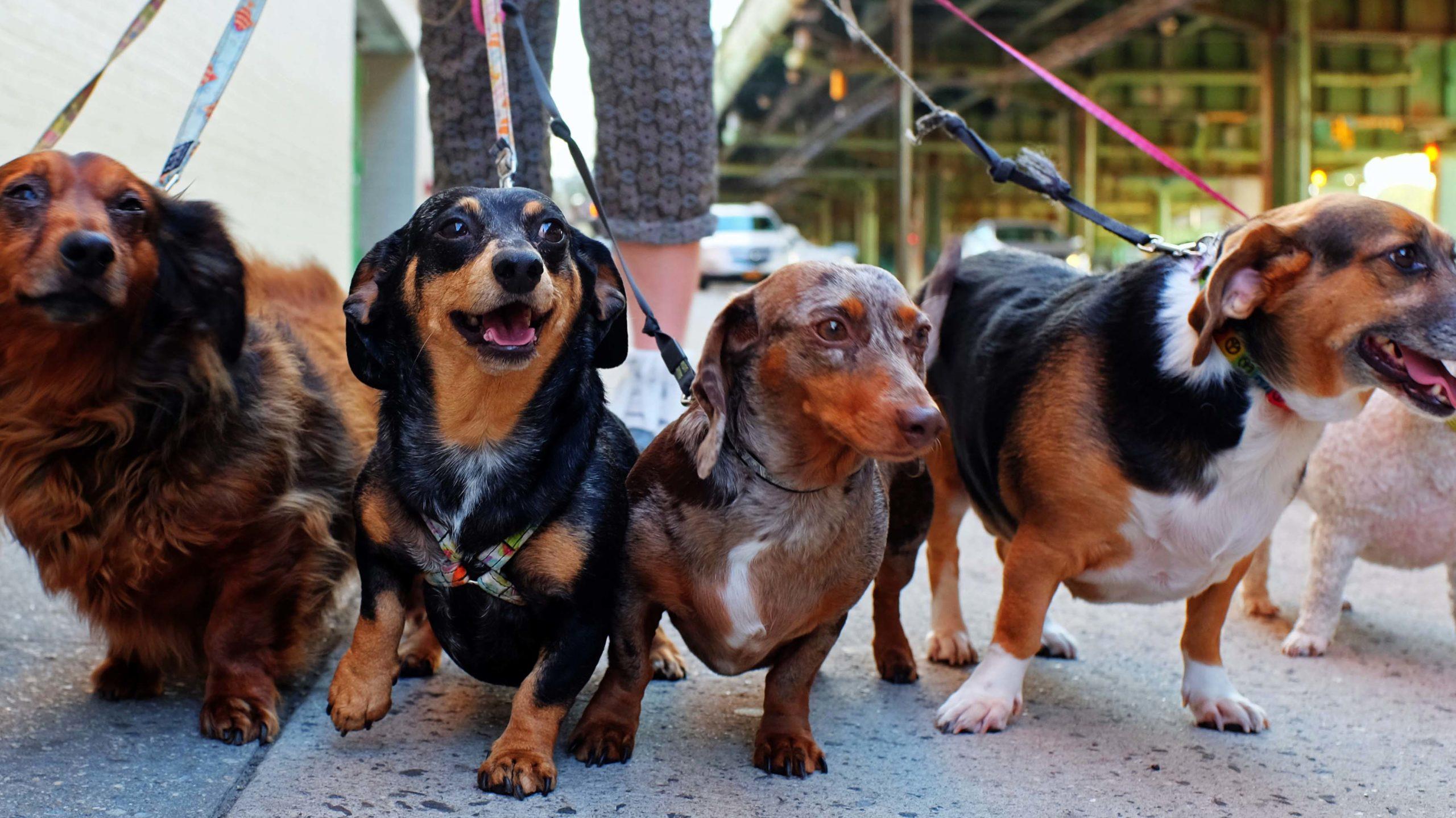 Takkie hondenuitlaatservice