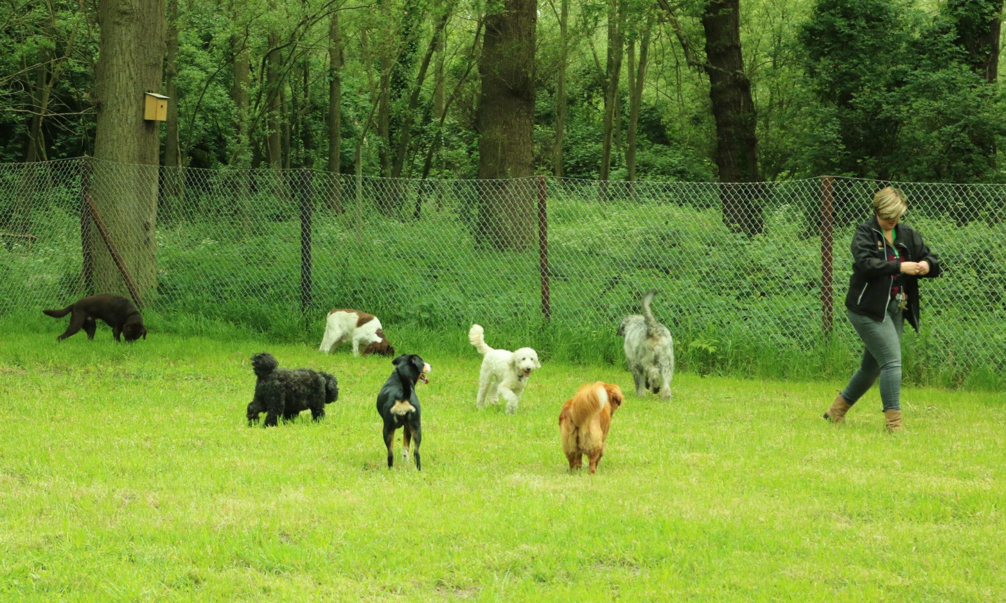 Takkie hondenuitlaatdienst